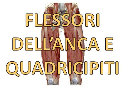 Flessori dell'anca e quadricipiti